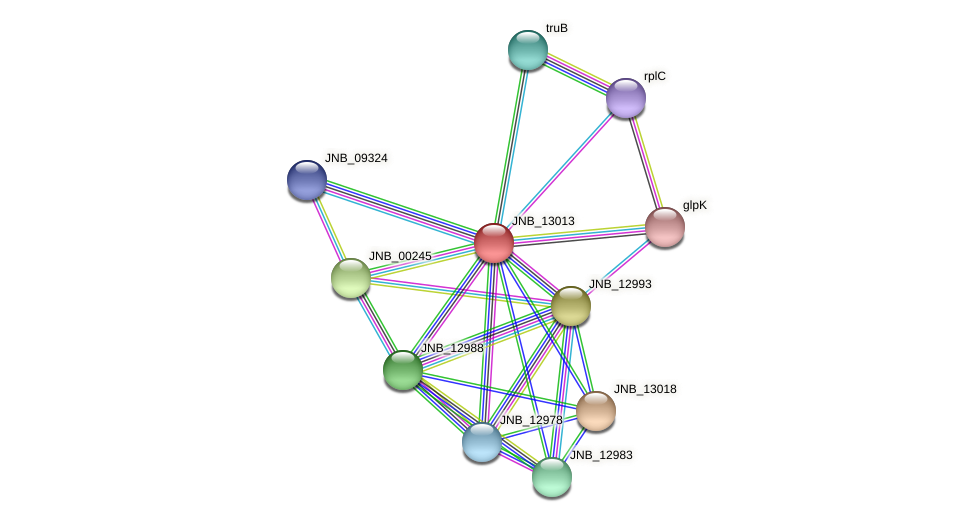 JNB_13013 protein (Janibacter sp. HTCC2649) - STRING interaction network