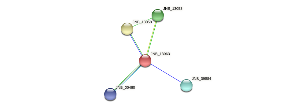 JNB_13063 protein (Janibacter sp. HTCC2649) - STRING interaction network