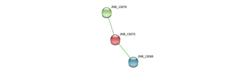JNB_13073 protein (Janibacter sp. HTCC2649) - STRING interaction network