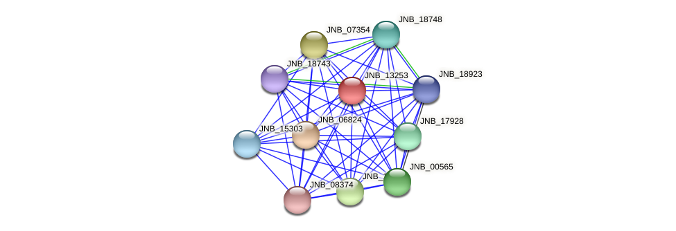 JNB_13253 protein (Janibacter sp. HTCC2649) - STRING interaction network