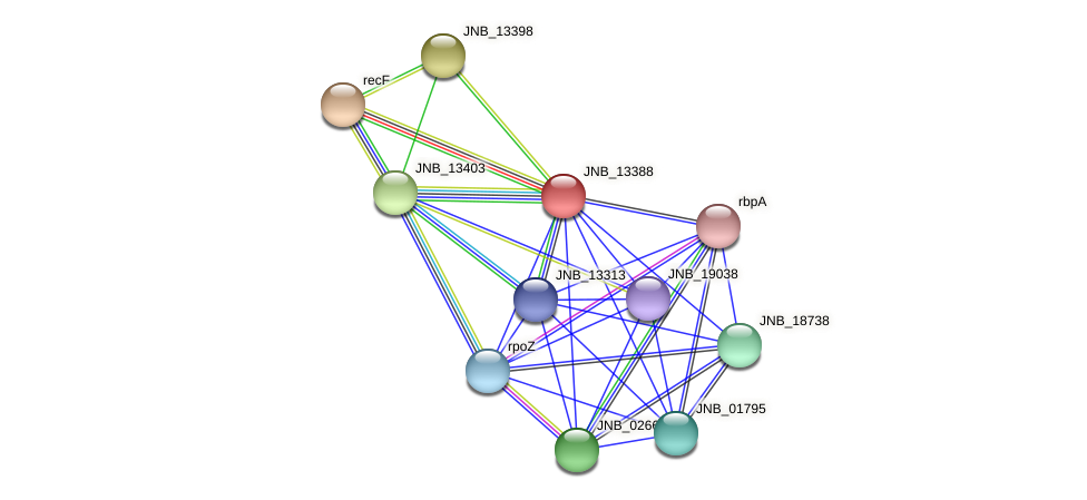 JNB_13388 protein (Janibacter sp. HTCC2649) - STRING interaction network