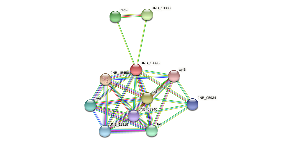 JNB_13398 protein (Janibacter sp. HTCC2649) - STRING interaction network
