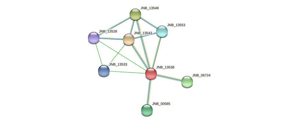 JNB_13538 protein (Janibacter sp. HTCC2649) - STRING interaction network