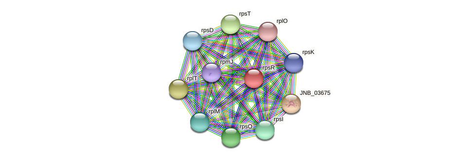 rpsR protein (Janibacter sp. HTCC2649) - STRING interaction network