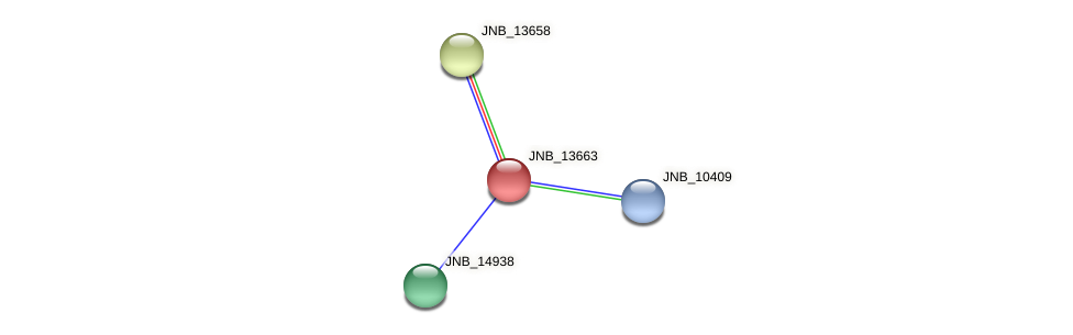 JNB_13663 protein (Janibacter sp. HTCC2649) - STRING interaction network