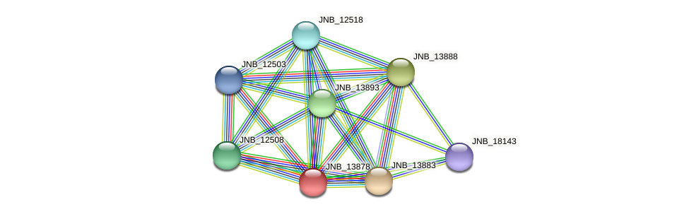 JNB_13878 protein (Janibacter sp. HTCC2649) - STRING interaction network