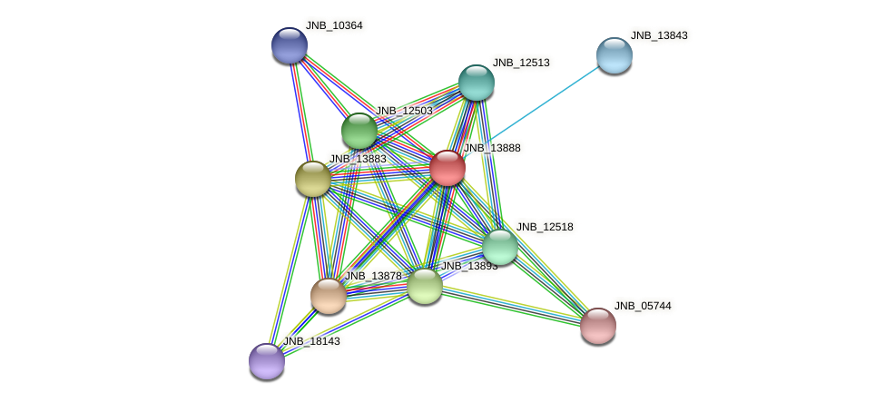 JNB_13888 protein (Janibacter sp. HTCC2649) - STRING interaction network
