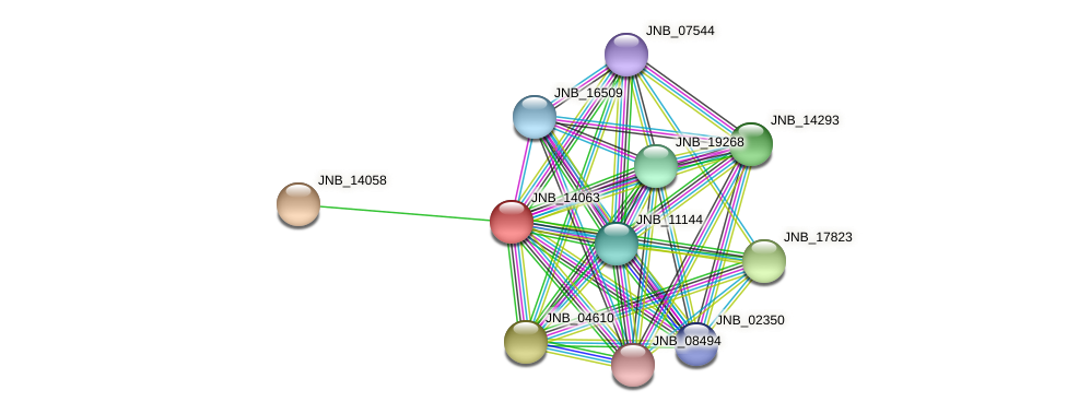 JNB_14063 protein (Janibacter sp. HTCC2649) - STRING interaction network