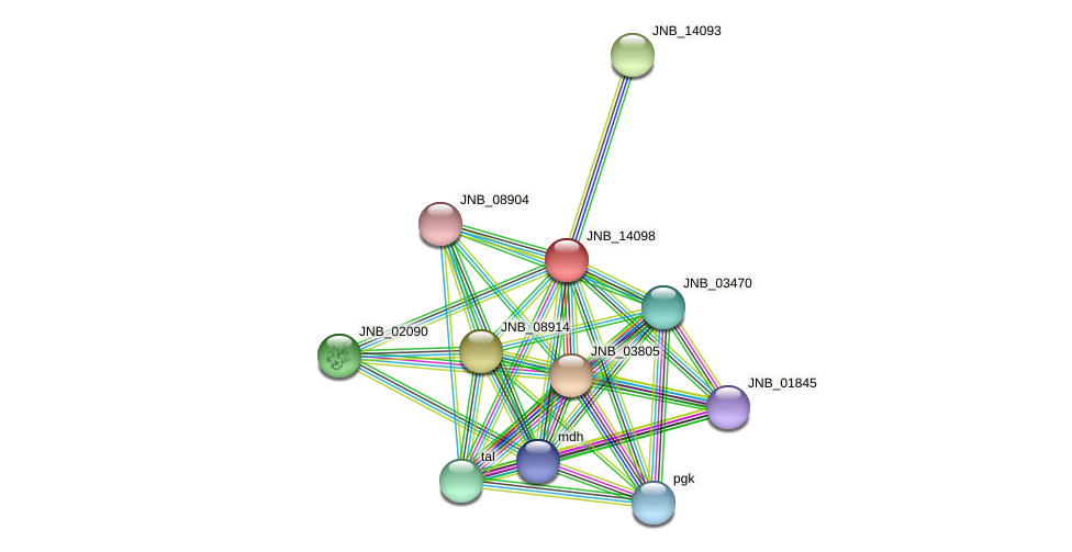 JNB_14098 protein (Janibacter sp. HTCC2649) - STRING interaction network