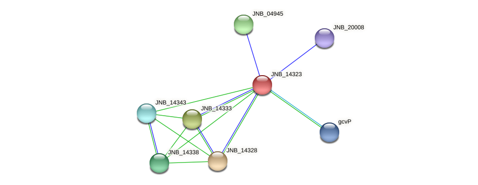 JNB_14323 protein (Janibacter sp. HTCC2649) - STRING interaction network