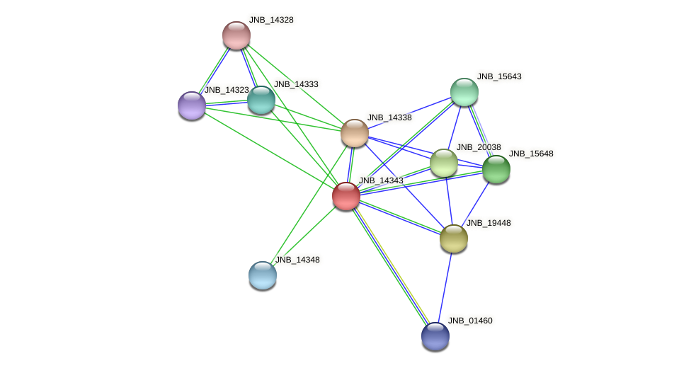 JNB_14343 protein (Janibacter sp. HTCC2649) - STRING interaction network