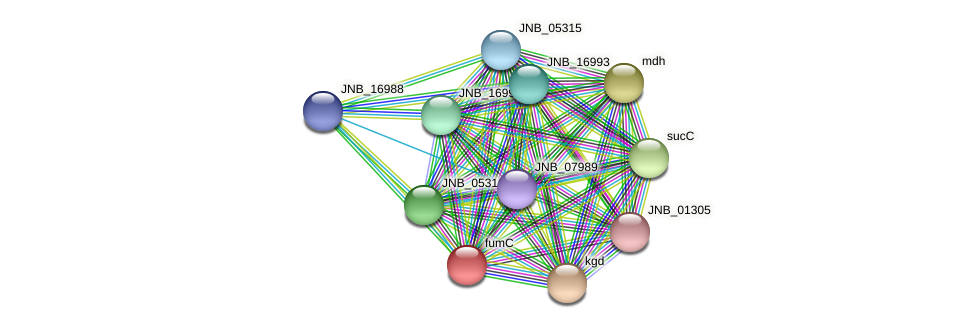 fumC protein (Janibacter sp. HTCC2649) - STRING interaction network