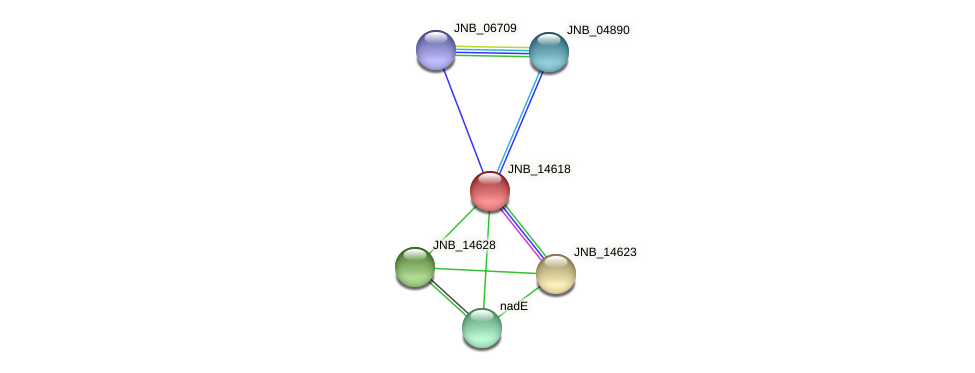 JNB_14618 protein (Janibacter sp. HTCC2649) - STRING interaction network