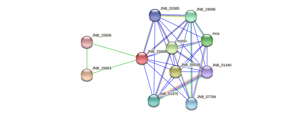 JNB_15668 protein (Janibacter sp. HTCC2649) - STRING interaction network