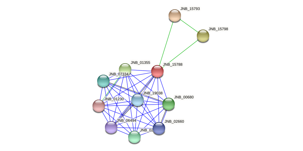 JNB_15788 protein (Janibacter sp. HTCC2649) - STRING interaction network