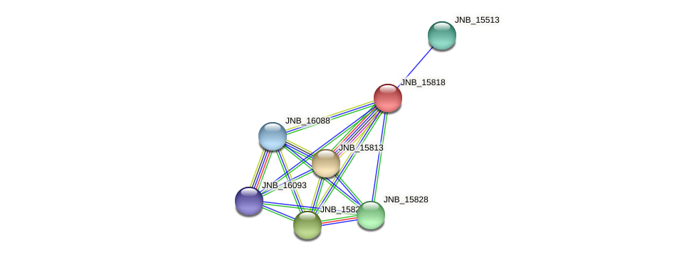 JNB_15818 protein (Janibacter sp. HTCC2649) - STRING interaction network