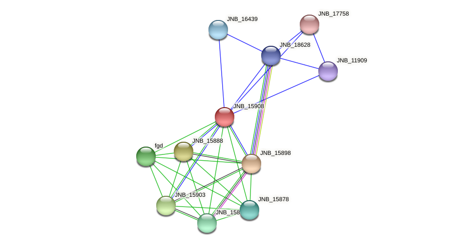 JNB_15908 protein (Janibacter sp. HTCC2649) - STRING interaction network
