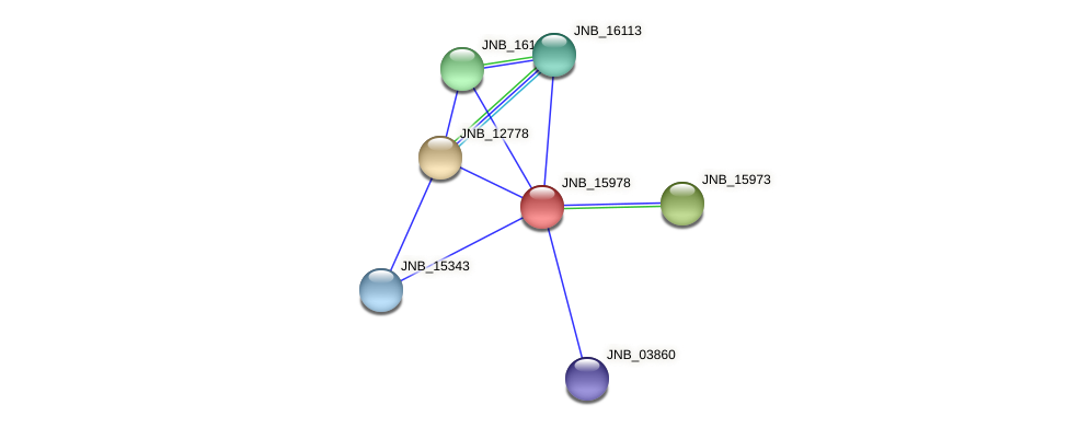 JNB_15978 protein (Janibacter sp. HTCC2649) - STRING interaction network