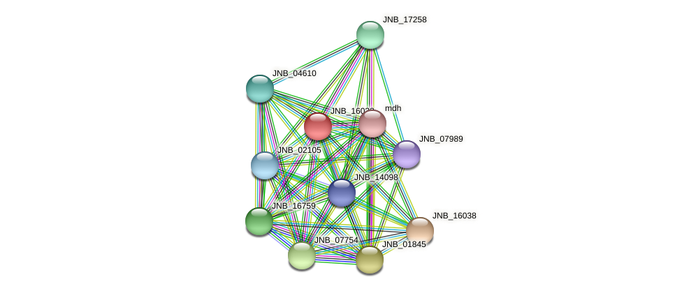 JNB_16033 protein (Janibacter sp. HTCC2649) - STRING interaction network