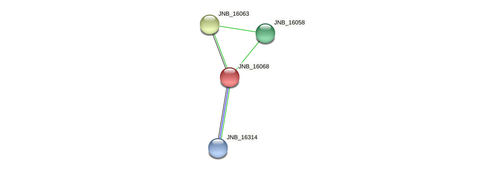 JNB_16068 protein (Janibacter sp. HTCC2649) - STRING interaction network