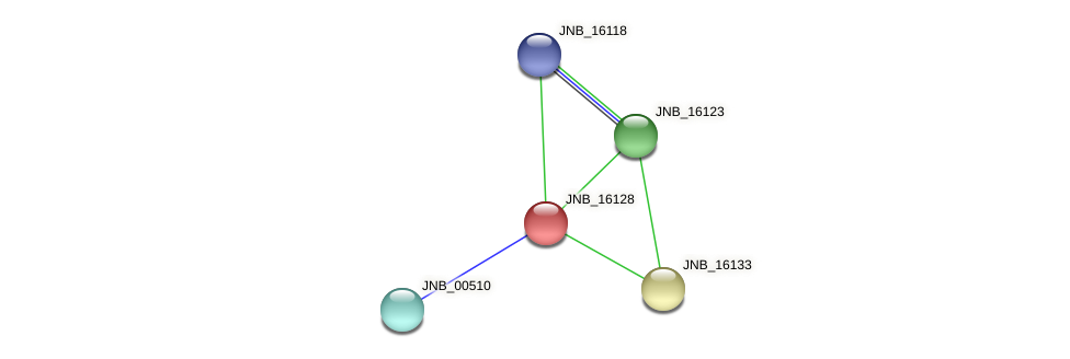 JNB_16128 protein (Janibacter sp. HTCC2649) - STRING interaction network