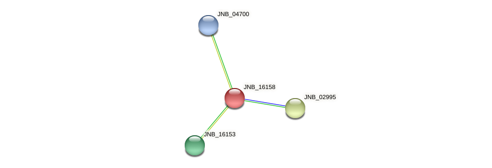 JNB_16158 protein (Janibacter sp. HTCC2649) - STRING interaction network