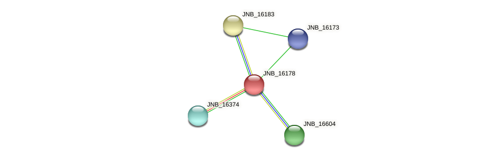 JNB_16178 protein (Janibacter sp. HTCC2649) - STRING interaction network