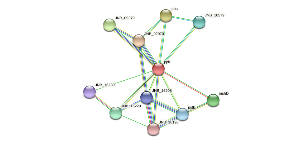 ppk protein (Janibacter sp. HTCC2649) - STRING interaction network