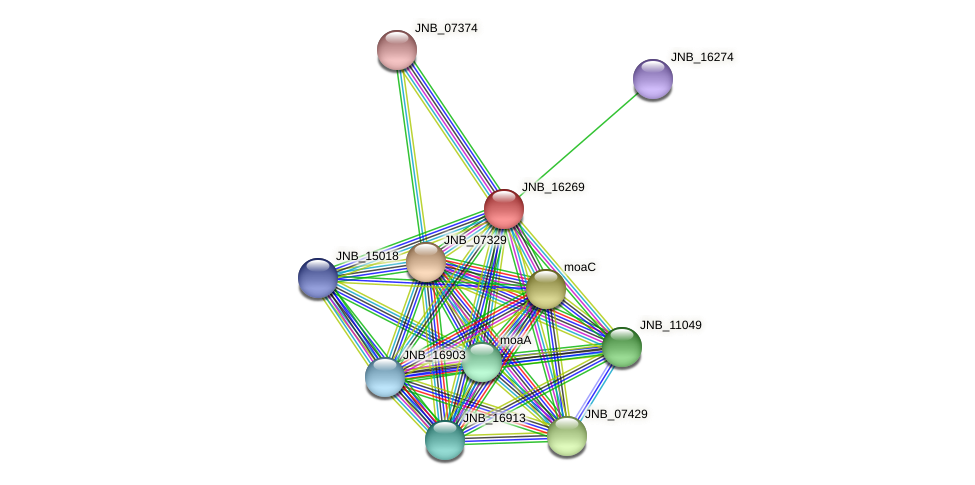 JNB_16269 protein (Janibacter sp. HTCC2649) - STRING interaction network