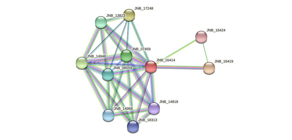 JNB_16414 protein (Janibacter sp. HTCC2649) - STRING interaction network