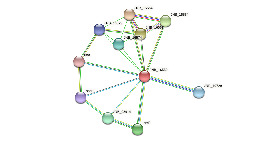 JNB_16559 protein (Janibacter sp. HTCC2649) - STRING interaction network