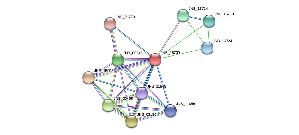 JNB_16709 protein (Janibacter sp. HTCC2649) - STRING interaction network
