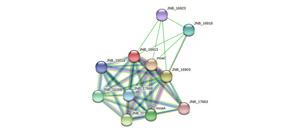 JNB_16913 protein (Janibacter sp. HTCC2649) - STRING interaction network