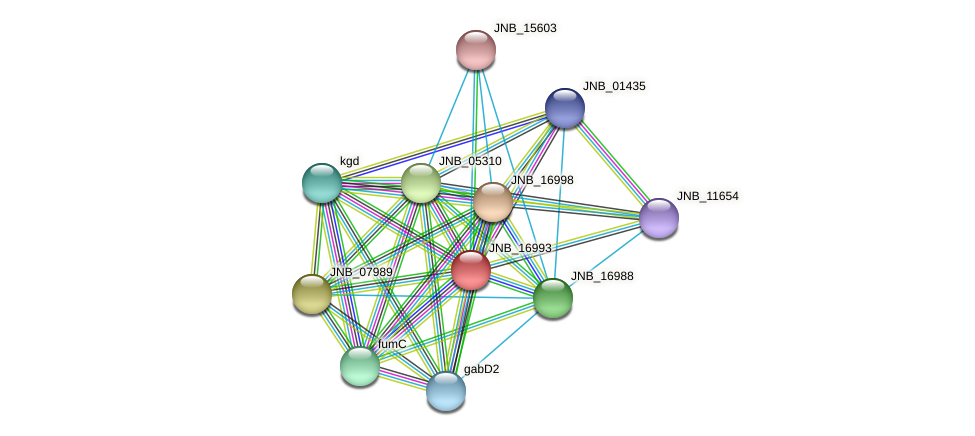 JNB_16993 protein (Janibacter sp. HTCC2649) - STRING interaction network