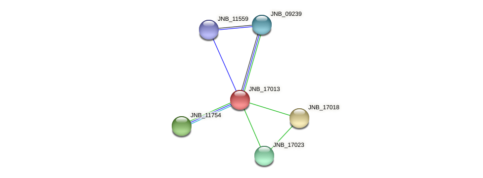JNB_17013 protein (Janibacter sp. HTCC2649) - STRING interaction network