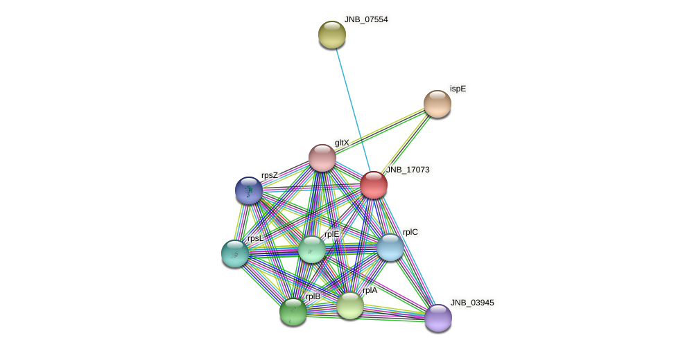 JNB_17073 protein (Janibacter sp. HTCC2649) - STRING interaction network