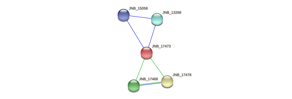 JNB_17473 protein (Janibacter sp. HTCC2649) - STRING interaction network