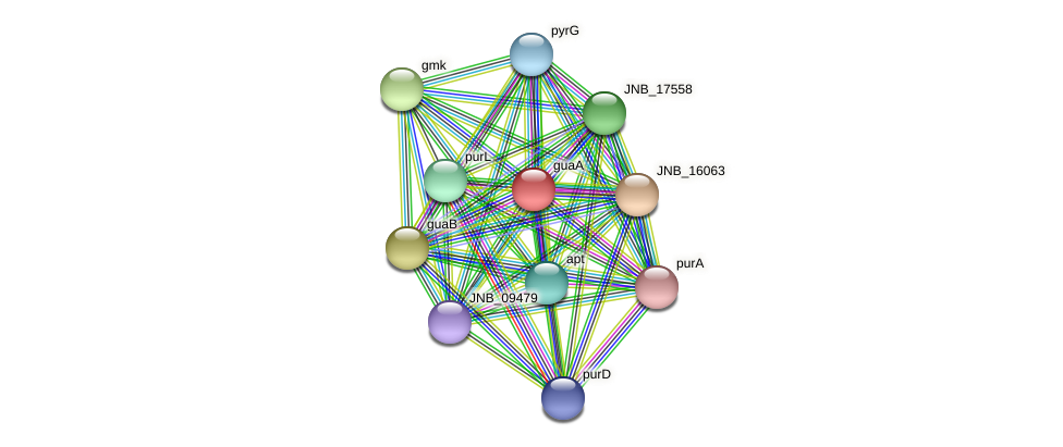 guaA protein (Janibacter sp. HTCC2649) - STRING interaction network