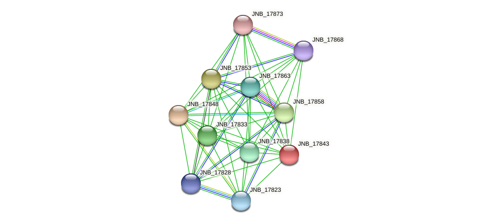 JNB_17843 protein (Janibacter sp. HTCC2649) - STRING interaction network