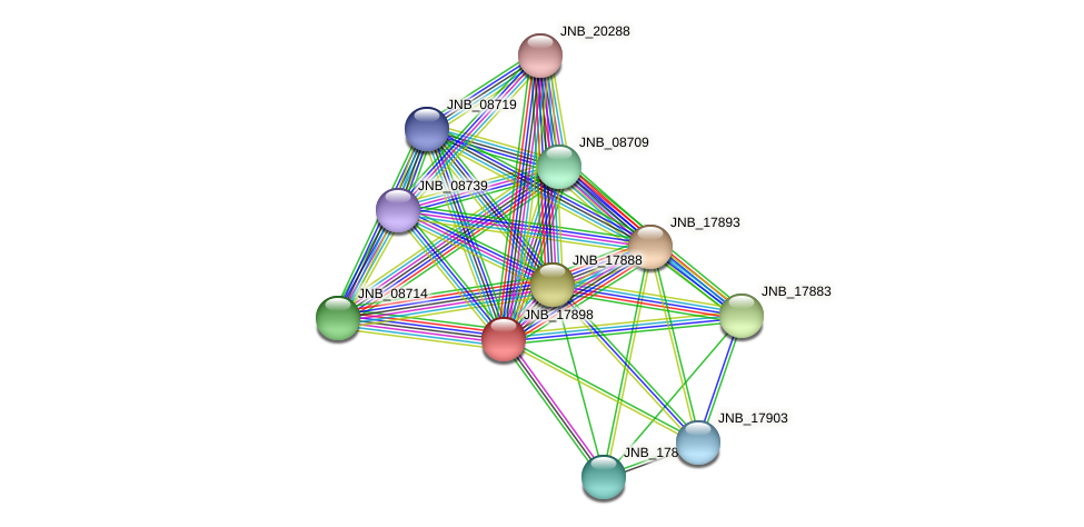 JNB_17898 protein (Janibacter sp. HTCC2649) - STRING interaction network