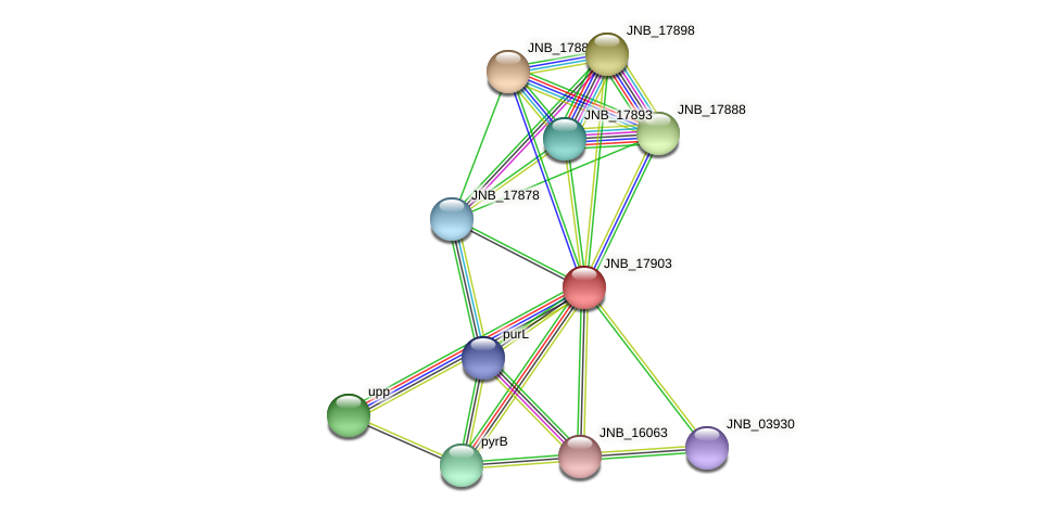 JNB_17903 protein (Janibacter sp. HTCC2649) - STRING interaction network