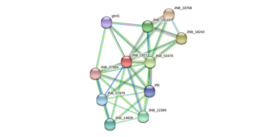 JNB_18113 protein (Janibacter sp. HTCC2649) - STRING interaction network
