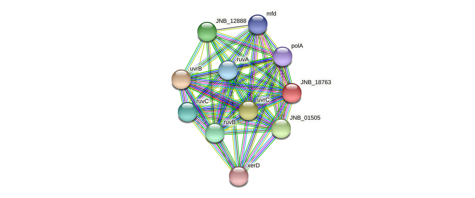 JNB_18763 protein (Janibacter sp. HTCC2649) - STRING interaction network