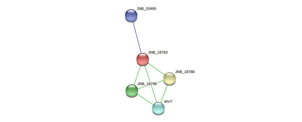 JNB_18783 protein (Janibacter sp. HTCC2649) - STRING interaction network