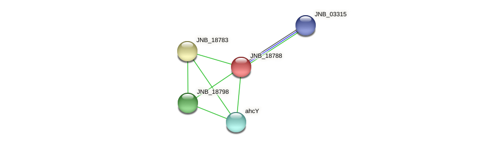 JNB_18788 protein (Janibacter sp. HTCC2649) - STRING interaction network