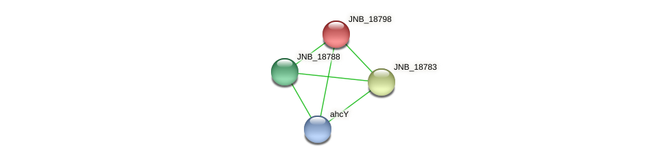 JNB_18798 protein (Janibacter sp. HTCC2649) - STRING interaction network