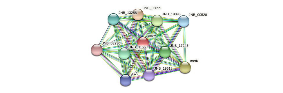 ahcY protein (Janibacter sp. HTCC2649) - STRING interaction network