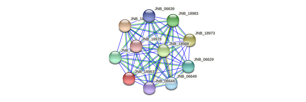 JNB_18963 protein (Janibacter sp. HTCC2649) - STRING interaction network