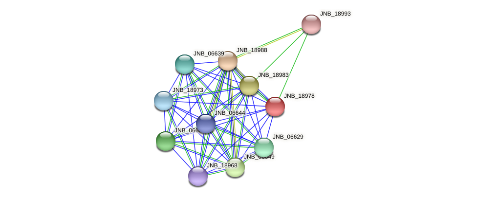 JNB_18978 protein (Janibacter sp. HTCC2649) - STRING interaction network