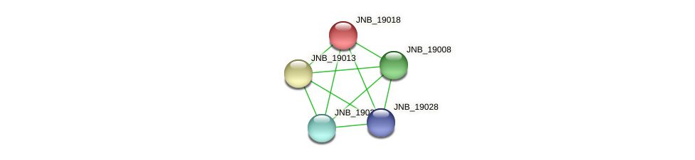 JNB_19018 protein (Janibacter sp. HTCC2649) - STRING interaction network